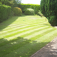 Commercial Grounds Lawn Maintenance