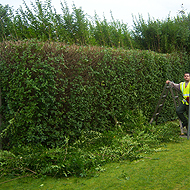 Shrubs being trimmed and shaped